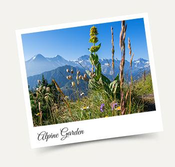 Botanical Alpine Garden, Schynige Platte