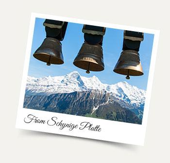 Take a Wengen excursion to the Schynige Platte in Summer!