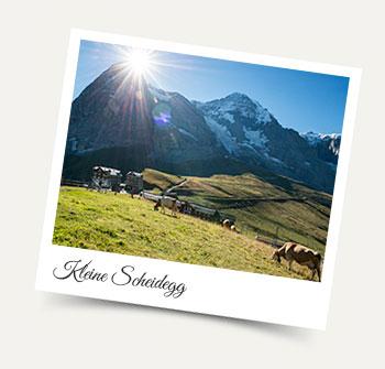 Summer visit to Kleine Scheidegg from Wengen