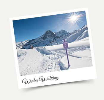 Winter walking in and around Wengen in the Jungfrau Region!
